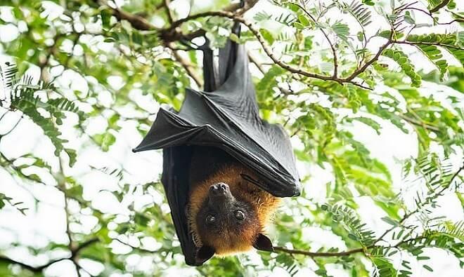 vietphil-Bat-8656-1580783278